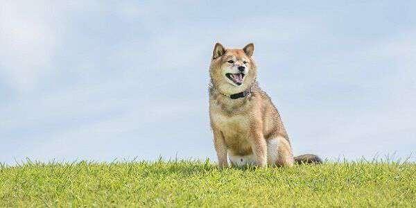 飼い主のわからない犬を飼ったら犯罪なのか
